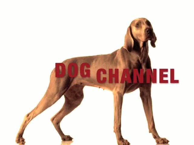 Логотип телеканала Dog Channel TV